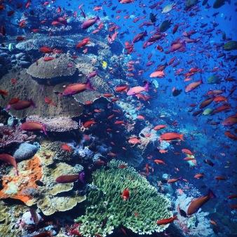 Abundant marine life in Komodo National Park