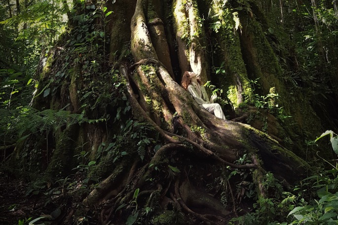 Sitting in a giant tree in the cloud forest of Bouquete Panama
