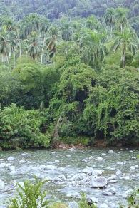 Toa river Baracoa