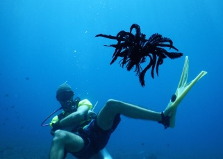 Diver with a feather star