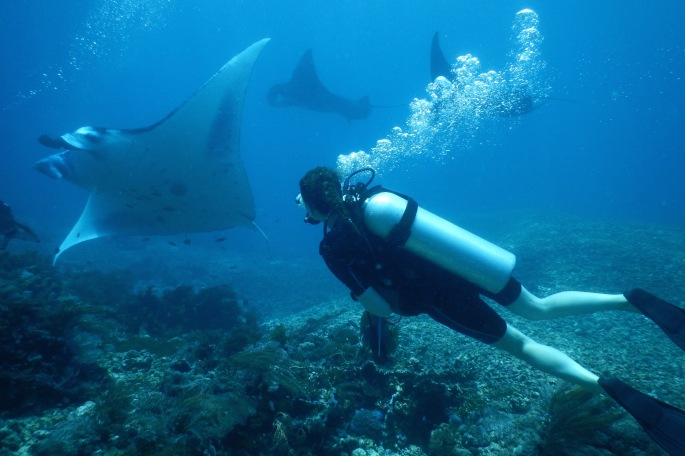 Diving with manta rays in Komodo National Park