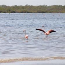 Flamingo lagoon Playa los Cocos Cuba