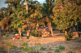 Agriculture on the Inhambane peninsula