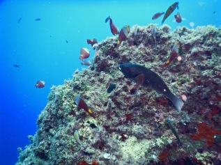 Underwater marine life in Malta