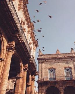 Pigeons on Plaza de Armas Habana Vieja