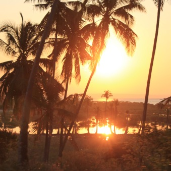 Setting sun through the palm trees on Inhambane peninsula