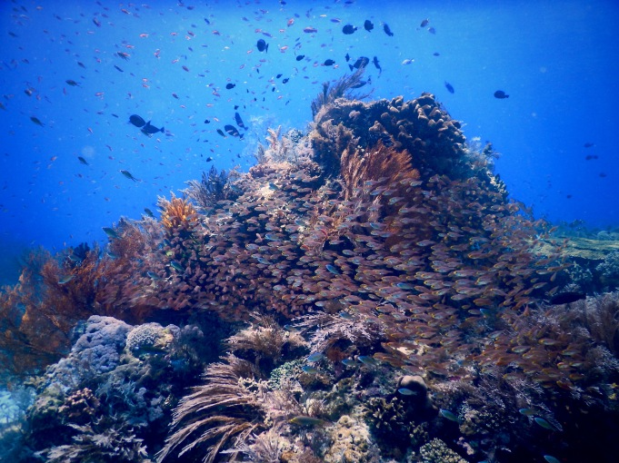 Underwater scene with plenty of fish, diving in Komodo National Park