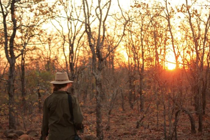 Kruger guided bush walk