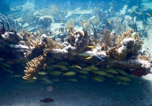 Wreck diving just off the coast of Playa los Cocos