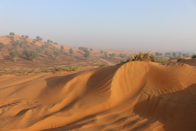 Al Wadi desert in the early morning