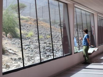 Al Hefaiyah Mountain Conservation Centre observation corridor