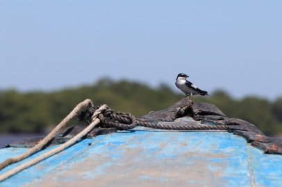 Bird hitching a ride on a river boat