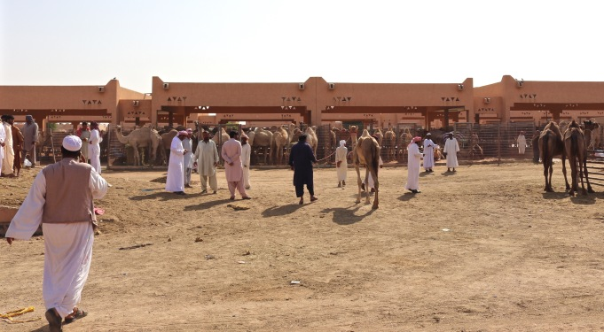 Camel merchants at Al Ain camel market