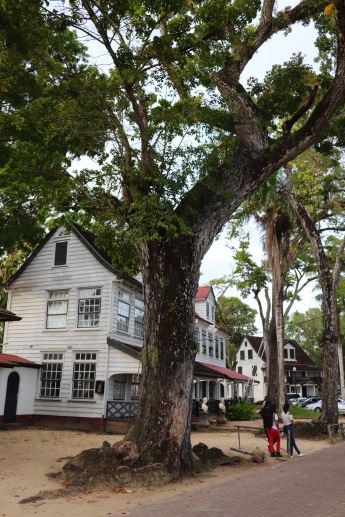 Colonial houses in Paramaribo