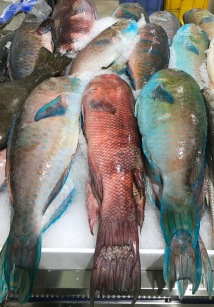 Colourful fish on offer at Deira fish souk