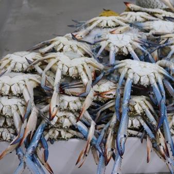 Blue crabs at the Deira fish souk, Dubai
