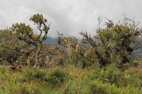 Lagunas de Volcan landscape