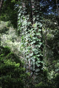 Lush cloud forest in Panama