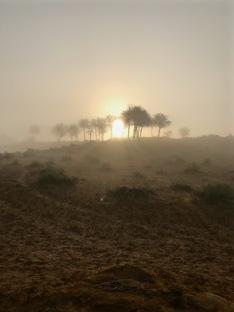 Misty sunrise over the Al Wadi desert