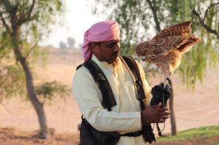 Owl and trainer at Al Wadi falconry show