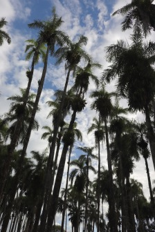 Palms in the Palmentuin Paramaribo