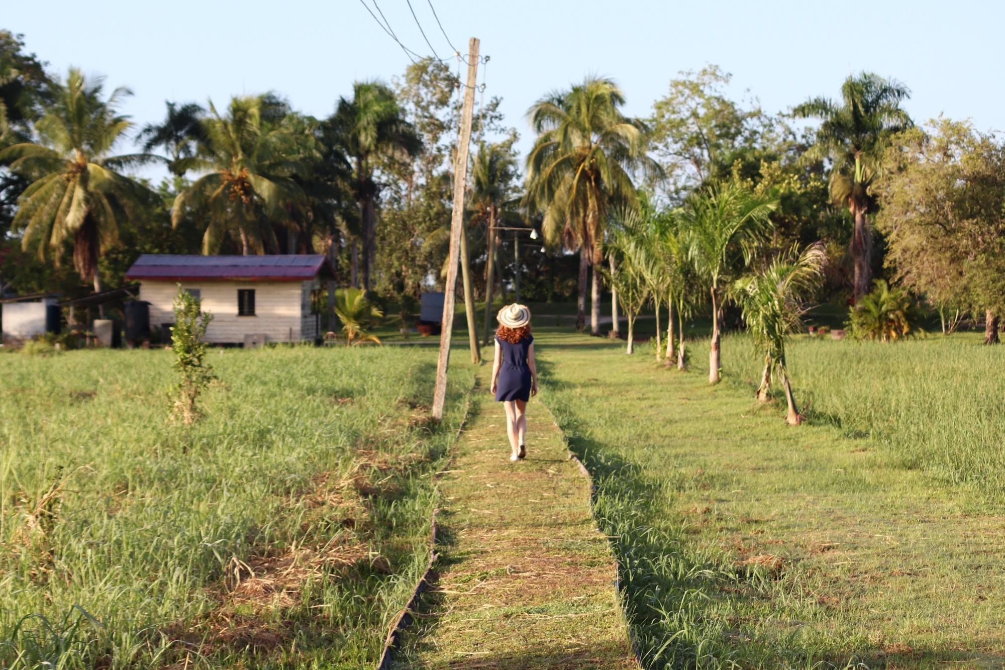 Plantation Frederiksdorp Suriname