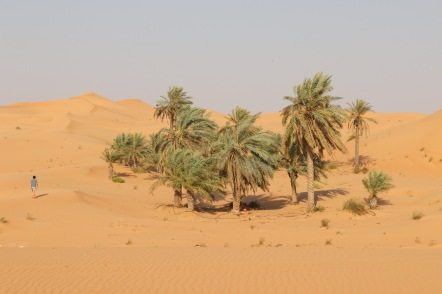 Sand dunes and date palms, Telal resort