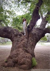 Big tree on Adonis nature trail Cyprus