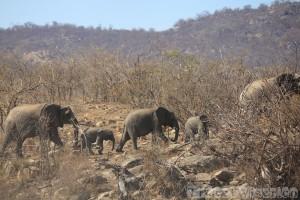 Elephant family, Kruger National Park