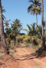 The road to Dunes de Dovela