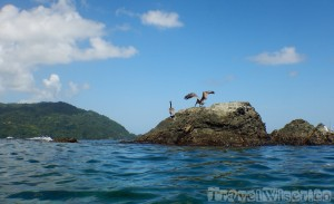 Pelicans on a rock in Pirate's Bay Tobago