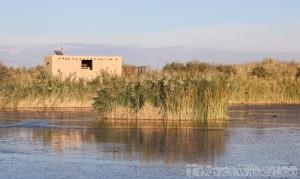 Azraq Wetland Reserve Jordan
