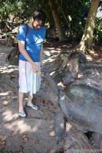 Feeding a giant tortoise on Curieuse Island, Seychelles