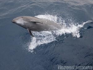 Jumping dolphin, Galapagos Islands