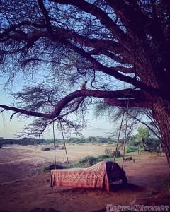 Vervet monkey on a branch above a lounge bed, Saruni Rhino Kenya