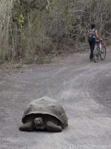 Camino de las Tortugas, Isla Isabela