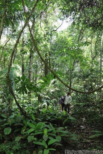 Bush walk in the Kanuku Mountains, Guyana