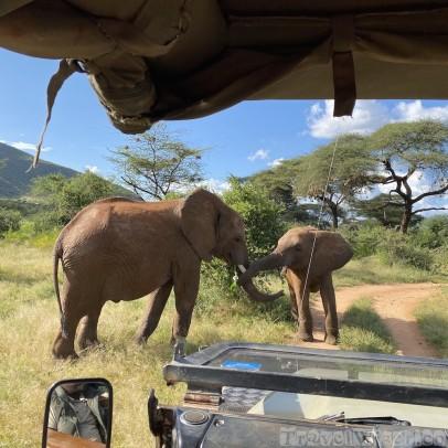 Elephants in front of our safari vehicle, Samburu National Reserve
