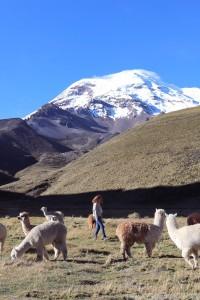 Ecuador trip from Andes to Amazon