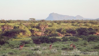 Impalas, Sera Rhino Sanctuary Kenya
