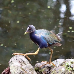 Waterfowl Jardin Botanico Quito