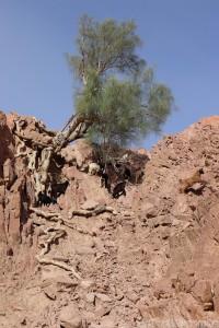 Goats, Wadi Dana Jordan