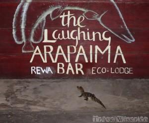 Black caiman at Rewa Lodge Arapaima bar