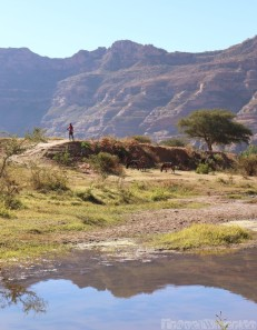 Boy and donkeys standing on a riverbank, Tigray Ethiopia