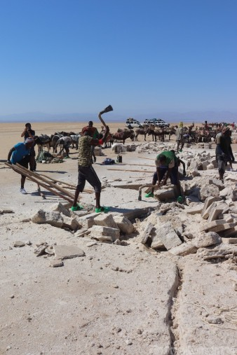 Afar men mining salt in the Danakil Depression
