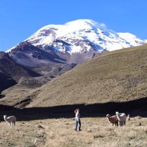 Walking among llamas at Volcan Chimborazo Ecuador