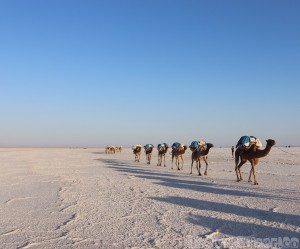 Camel caravan, Danakil Depression Ethiopia