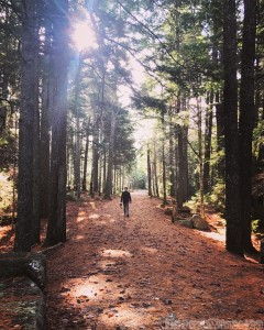 Hiking on the Acadia Carriage Roads, Maine