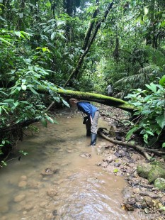 Yasuni National Park bushwalk