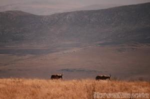 Antelopes in Malolotja Nature Reserve Swaziland